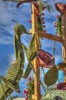 Photograph - Praying Mantis by David Zanzinger