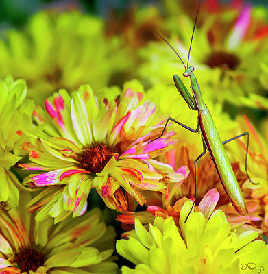 Photograph - Praying Mantis by Dee Browning