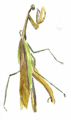 Painting - Praying Mantis by Kevin Callahan