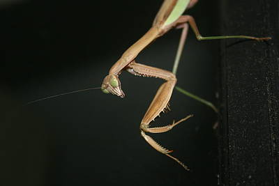 Photograph - Praying Mantis by Winter Photography