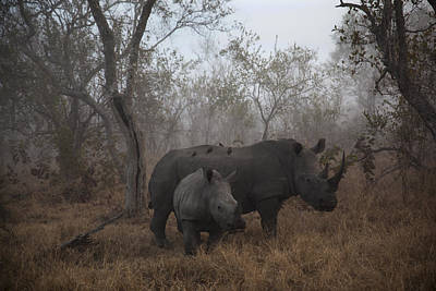 Rhinoceros Photograph - Pre Dawn Encounter by Andre Victor