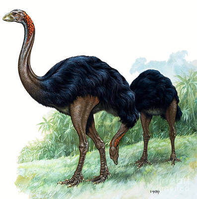 Emu Painting - Pre-historic Birds by David Nockels