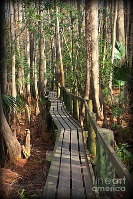 Florida Swamp Photograph - Precarious Path by Carol Groenen