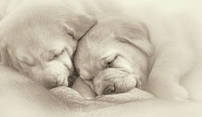 Photograph - Precious Lab Puppies Nursing Sepia by Jennie Marie Schell