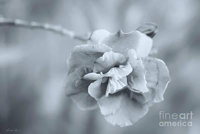Photograph - Precious Silver by Linda Lees