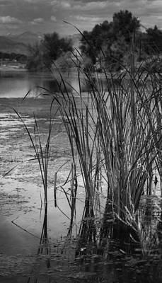 Photograph - Precision by Rae Ann  M Garrett