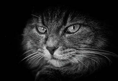 Photograph - Predator by Alessandro Della Pietra