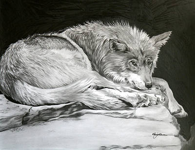 Prescott Drawing - Predator Or Prey by Geri Dunn