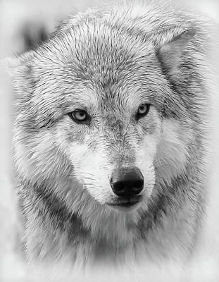 Photograph - Predator Wolf Face by Athena Mckinzie