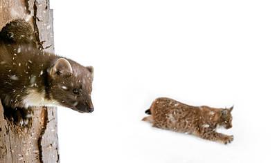 Photograph - Predators by Arterra Picture Library