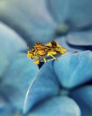 Photograph - Predatory Hemiptrian 1 by Douglas Barnett