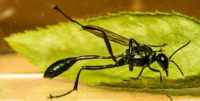 Preditory Wasp 1 Art Print