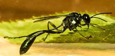 Preditory Wasp 2 Art Print