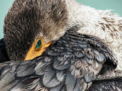 Photograph - Preening Cormorant In Key West by Bob Slitzan