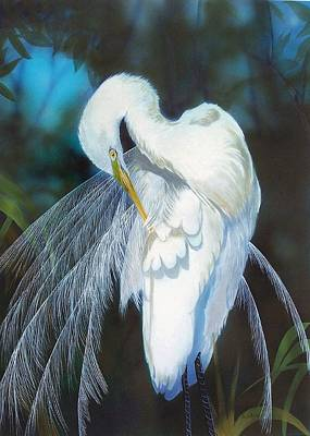 Painting - Preening Egret  Sold by Jack Bolin