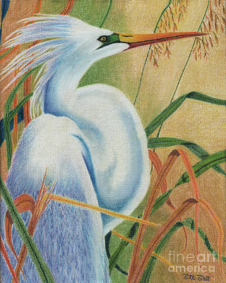Herons Drawing - Preening Egret by Peter Piatt