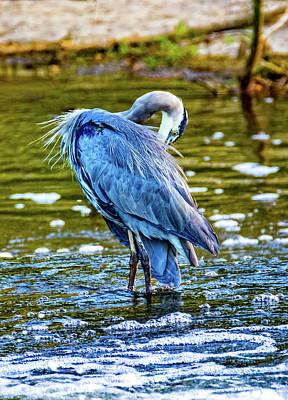 Photograph - Preening Great Blue Heron by Steve Harrington