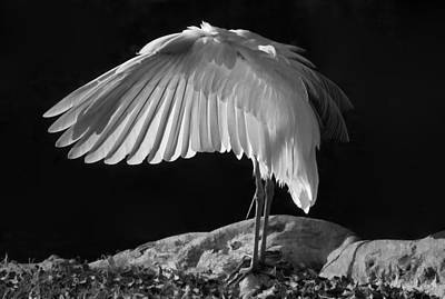 Preening Great Egret By H H Photography Of Florida Art Print by HH Photography of Florida