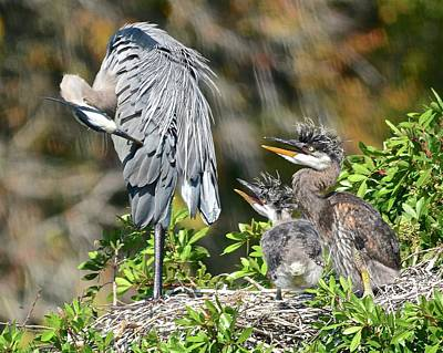 Photograph - Preening Instruction by Carol Bradley