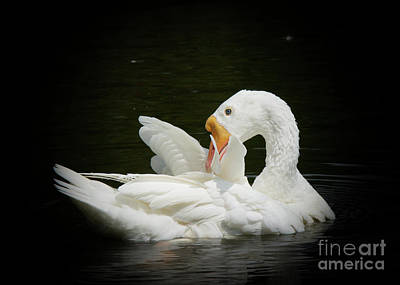 Photograph - Preening by Lisa L Silva