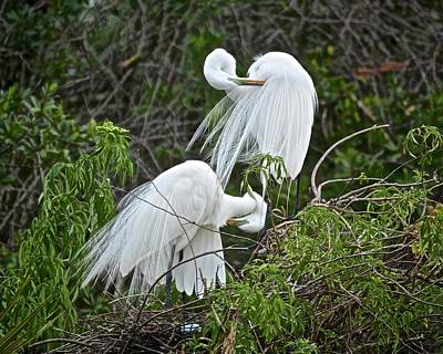 Photograph - Preening Pair by Carol Bradley