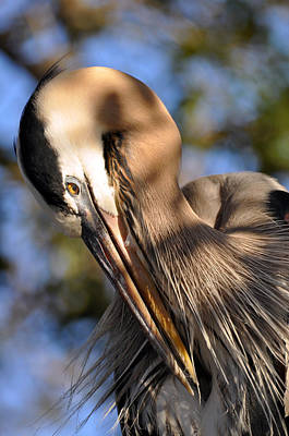 Photograph - Preening Those Feathers by Rose  Hill