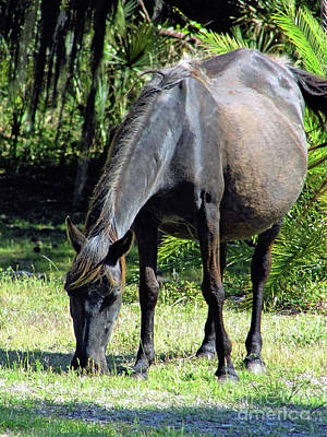 Photograph - Pregnant Mare by D Hackett