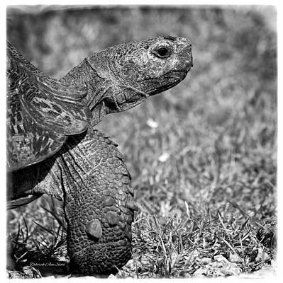 Photograph - Prehistoric Face by Deborah Ann Stott