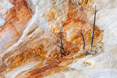 Mammoth Hot Springs Photograph - Prehistoric Trees by Todd Klassy
