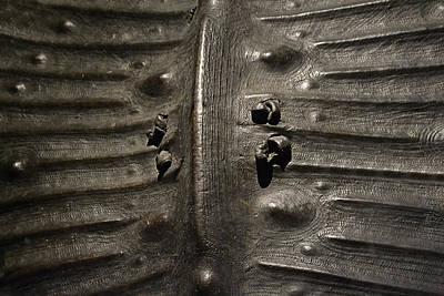 Photograph - Prehistoric Turtle Shell by Nadalyn Larsen