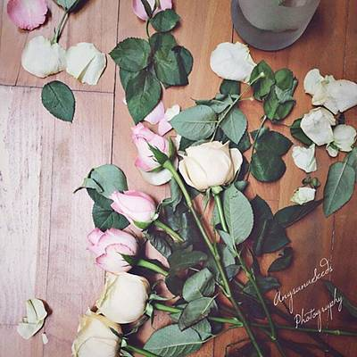 Roses Photograph - Preparing For A Shoot. #roses by Ivy Ho