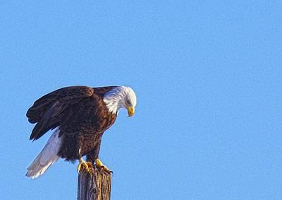 Photograph - Preparing For Patriotic Flight Eagle by Amanda Smith