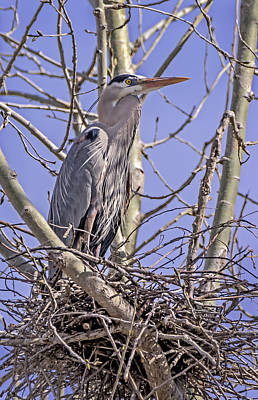 Photograph - Preparing The Nest by Loree Johnson