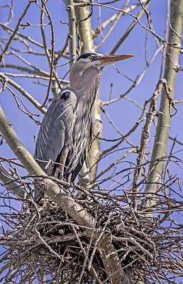Photograph - Preparing The Nest by Loree Johnson