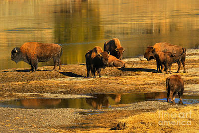 Photograph - Preparing To Cross The Yellowstone River by Adam Jewell