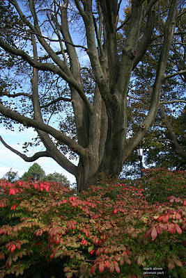 Photograph - Prescott Park Tree by Mark Alesse