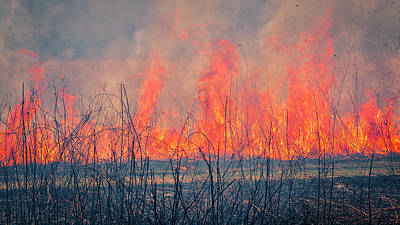 Photograph - Prescribed Burn 3 - Uw Arboretum - Madison - Wisconsin by Steven Ralser