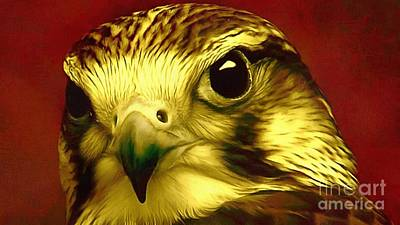 Painting - Presidential Hawk Eye by Catherine Lott