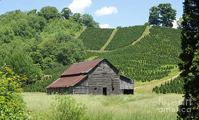 Photograph - Presnell Barn by Annlynn Ward