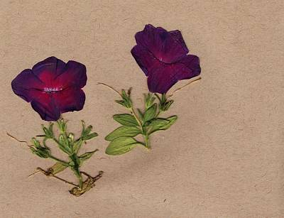Pressed Flowers Mixed Media - Pressed Petunias by Anne Seay