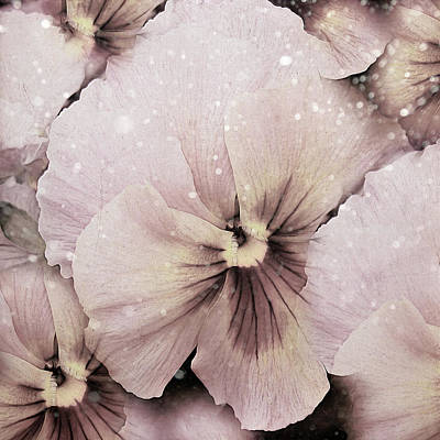 Pressed Flowers Photograph - Pressed Vintage Winter Pansy  by Georgiana Romanovna
