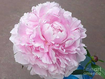 Pretty And Pink Art Print by Barb Montanye Meseroll