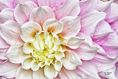 Photograph - Pretty And Pink by Peg Runyan