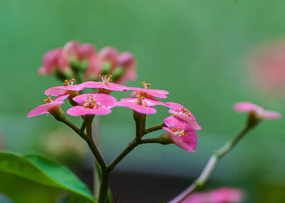 Photograph - Pretty And Pink by Tom Potter