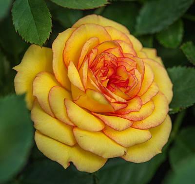 Photograph - Pretty Begonia by Jane Luxton