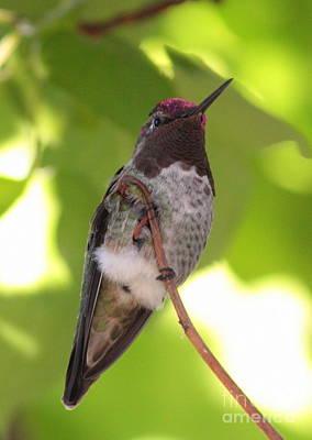 Photograph - Pretty Bird by Carol Groenen