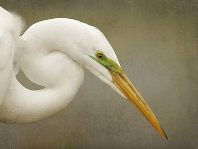 Photograph - Pretty Bird by Charles McKelroy