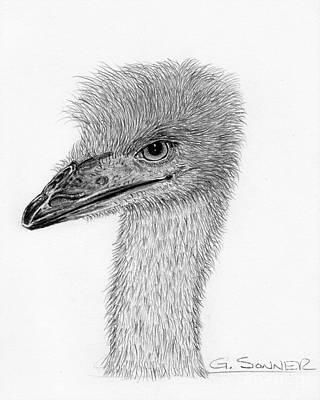 Pretty Bird Original