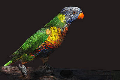 Photograph - Pretty Bird by Susan Vineyard