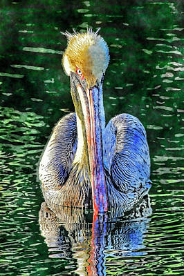 Photograph - Pretty Boy by HH Photography of Florida